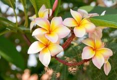 Grupp av gula vit- och rosa färgblommor royaltyfri fotografi