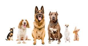 Grupp av gullig hundkapplöpning som tillsammans sitter arkivbilder