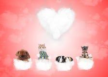 Grupp av gulliga djur på förälskelsemoln Royaltyfri Foto
