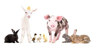 Grupp av gulliga lantgårddjur som tillsammans står arkivfoton