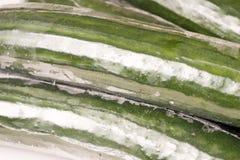 Grupp av gurkan som slås in i plast- filmer Royaltyfri Fotografi