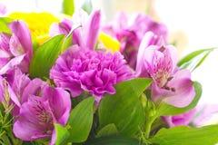 Grupp av härliga blommor för vår Royaltyfri Foto