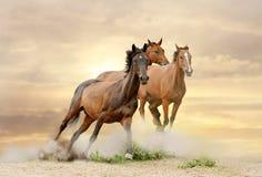 grupp av hästar royaltyfria foton