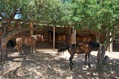 Grupp av hästar mellan träden Arkivbild