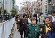 Grupp av höga japanska kvinnor royaltyfria bilder