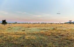 Grupp av herbivordjur i savannah på africa arkivbild