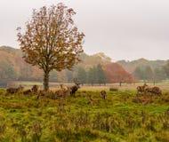Grupp av hjortar Royaltyfria Foton