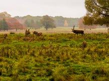 Grupp av hjortar Royaltyfri Bild