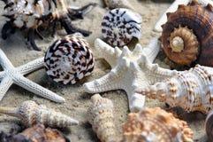 Grupp av härliga havsskal på stranden Royaltyfria Foton