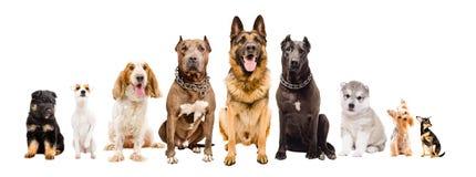 Grupp av hundar av olika avel royaltyfria bilder