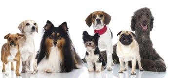 Grupp av hundkapplöpning royaltyfria bilder