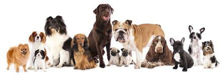 Grupp av hundkapplöpning Fotografering för Bildbyråer