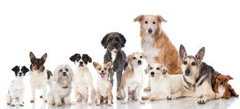 Grupp av hundkapplöpning royaltyfria foton