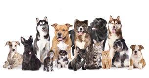 Grupp av hundkapplöpning och katter Royaltyfri Bild