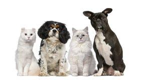 Grupp av hundkapplöpning och katter arkivbild