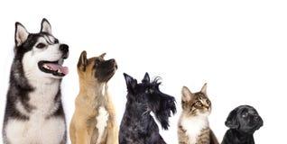 Grupp av hundkapplöpning och kattungen arkivbilder