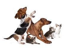 Grupp av hundkapplöpning och kattungen Royaltyfria Foton