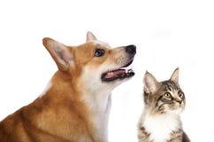 Grupp av hundkapplöpning och kattungen som ser upp Arkivbilder