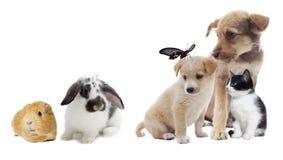 Grupp av husdjur arkivfoto