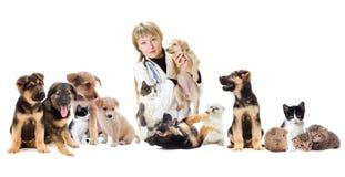 Grupp av husdjur royaltyfri fotografi