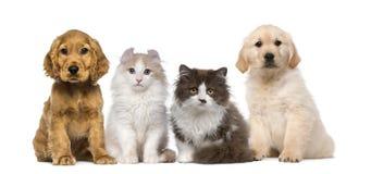 Grupp av husdjur: kattunge och valp på ett rått Royaltyfri Foto