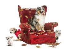 Grupp av husdjur på en förstörd fåtölj som isoleras royaltyfri foto