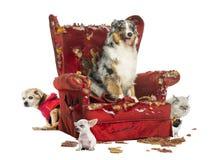 Grupp av husdjur på en förstörd fåtölj som isoleras royaltyfria bilder