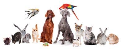 Grupp av husdjur på vit royaltyfria bilder