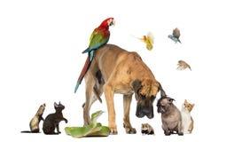Grupp av husdjur tillsammans Arkivfoton