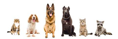 Grupp av husdjur som tillsammans sitter Arkivbild