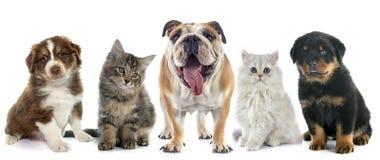 Grupp av husdjuret arkivbilder