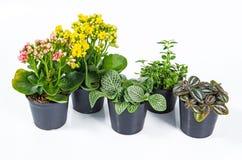 Grupp av husväxter på vit bakgrund Royaltyfria Bilder