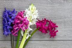 Grupp av hyacintblommor Arkivbild