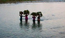 Grupp av indiska kvinnor som bär kärvar av gräs på deras huvud och korsar floden i Jim Corbett National Park, Indien på 10 20 201 Arkivfoton