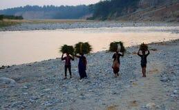 Grupp av indiska kvinnor som traditionellt bär på kärvar av gräs på deras huvud på flodbanken i Jim Corbett National Park, Indien Arkivfoton