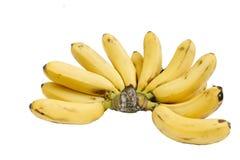 Grupp av isolerade bananer Royaltyfri Fotografi
