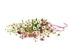 Grupp av isolerade vita och rosa tusenskönor Fotografering för Bildbyråer