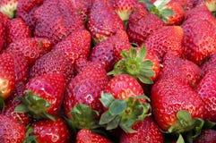 Grupp av jordgubbar Royaltyfria Bilder