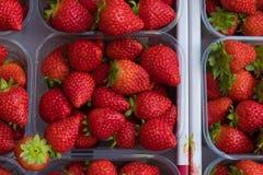 Grupp av jordgubbar i den plast- asken royaltyfria bilder