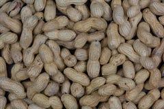 Grupp av jordnötter Royaltyfria Bilder