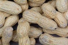 Grupp av jordnötter Royaltyfri Bild