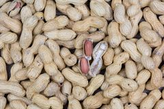 Grupp av jordnötter Royaltyfri Fotografi