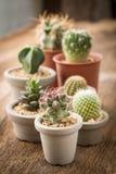 Grupp av kaktuns på på den wood bakgrunden fotografering för bildbyråer