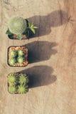 Grupp av kaktusväxter och kopieringsutrymme, tappningstil Royaltyfri Bild