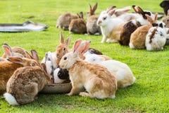 Grupp av kaniner Arkivfoto