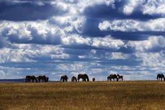 Grupp av kastanjebruna hästar som betar i fälten av ståndsmässiga Waterford, Irland Fotografering för Bildbyråer