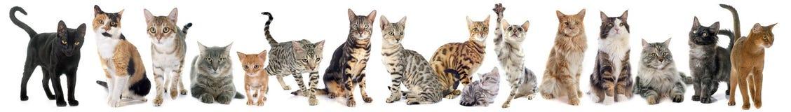 Grupp av katten royaltyfria bilder