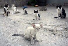 Grupp av katter arkivbilder