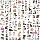 Grupp av katter royaltyfri fotografi