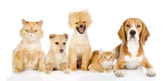 Grupp av katter och hundkapplöpning framme. Arkivbild
